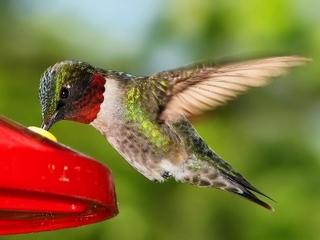 hummingbird14.jpg