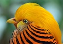 orange%20bird.jpeg